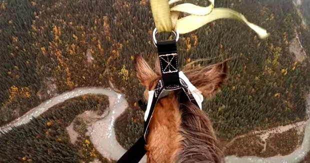 this helicopter horse rescue will give you all the feels
