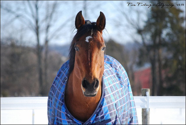flickr.com_Five-Furlongs_Blanketed-Horse