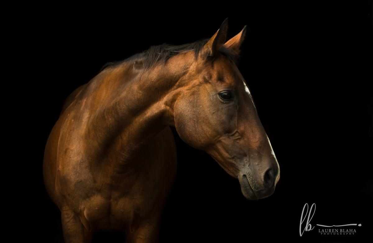 horse portraits thoroughbred breathless leave mare angel portrait blaha lauren horsenetwork these