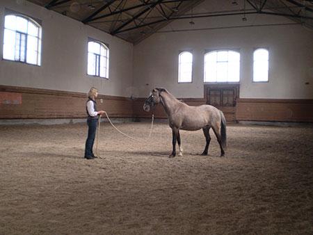 Great Relationships with one's horse always begin on the ground—Stephanie Lockhart, St. Gallen Switzerland. ©Tim Hayes collection 2014