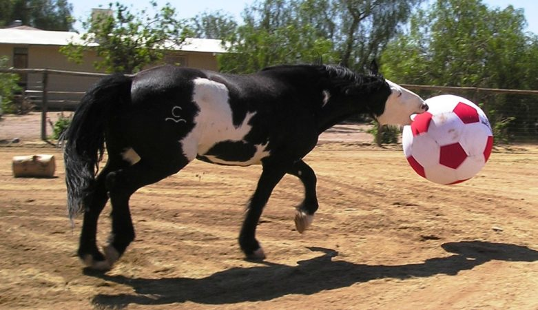 Elvis with his Equi-Spirit Ultimate Cordura Ball