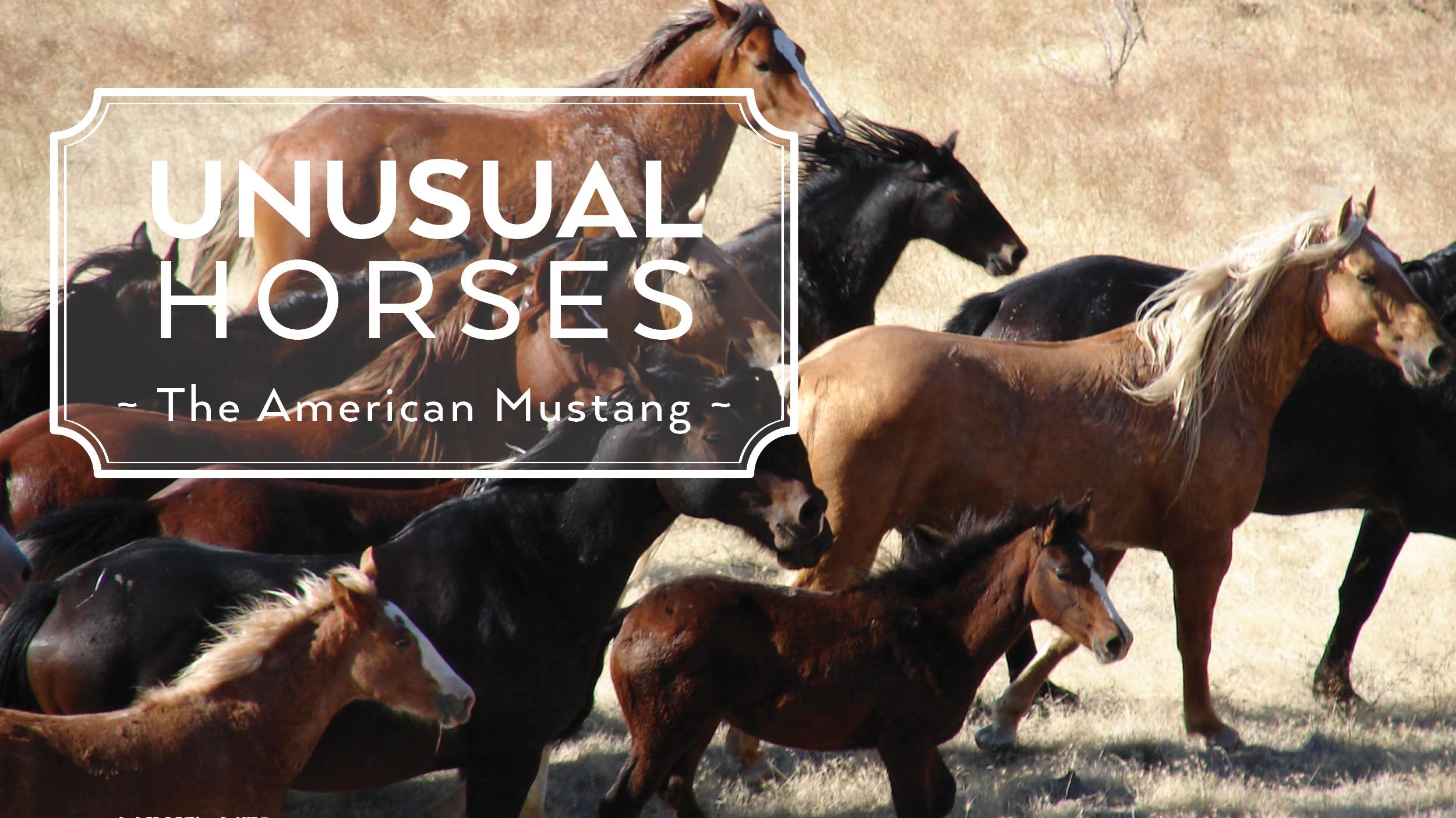 Unusual Horses American Mustang