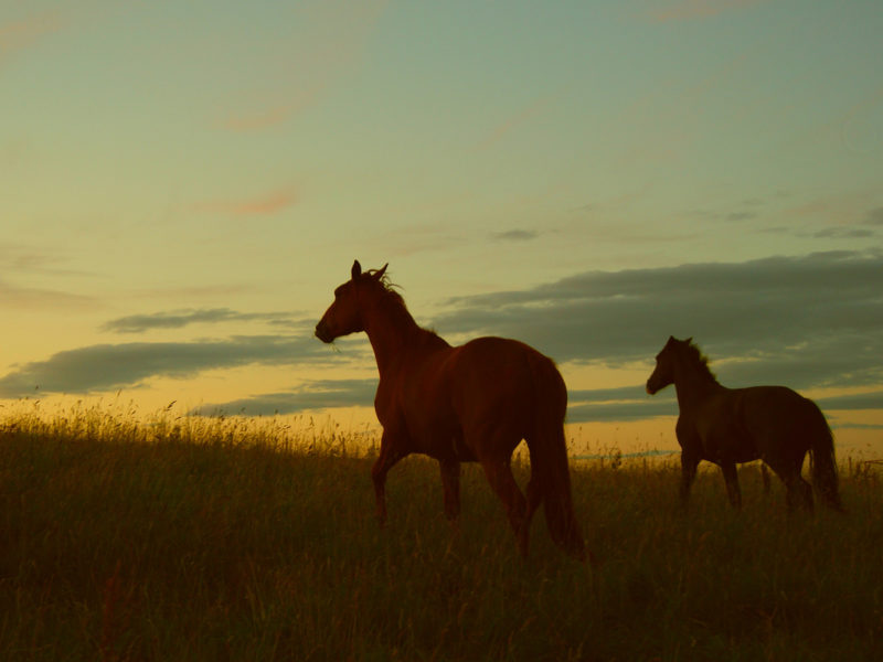 Horses Sunset Scenic FREE