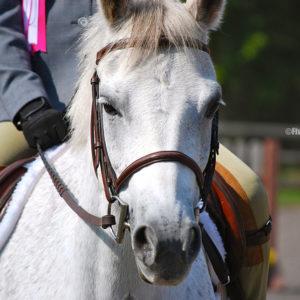 flickr-pony