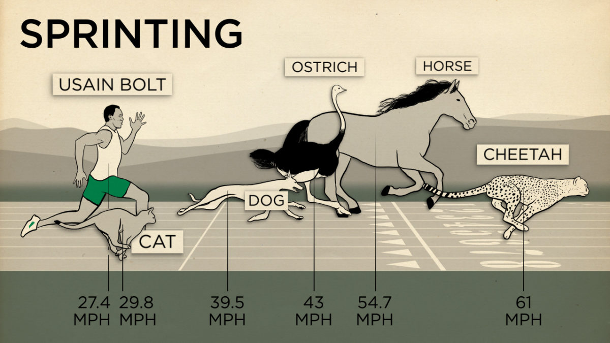 Can Dogs Run As Fast As Horses