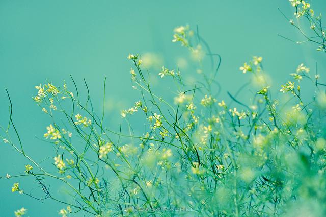 ©Rachel Samanyi/Flickr CC by 2.0