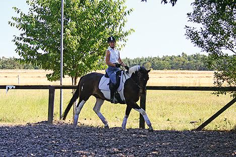 Photo from Creative Dressage Schooling by Julia Kohl
