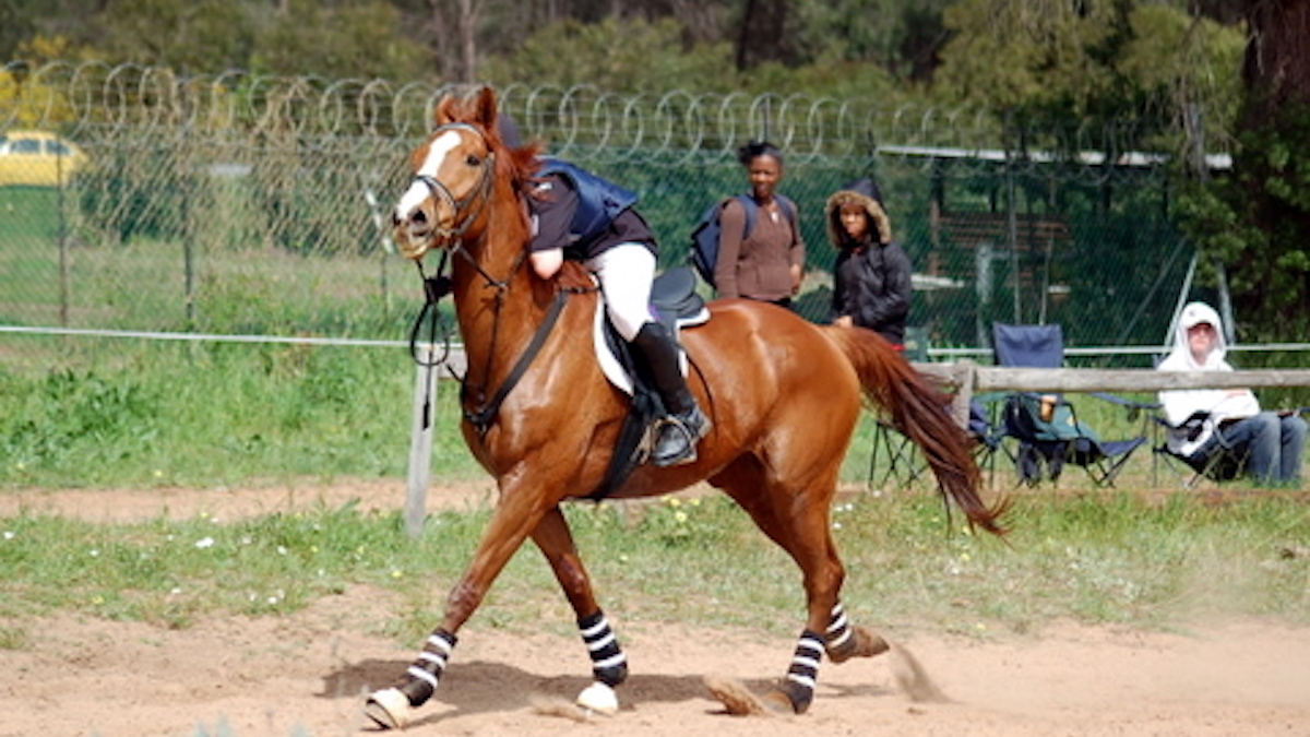 Clever Horse Develops Fitness Plan for Riders