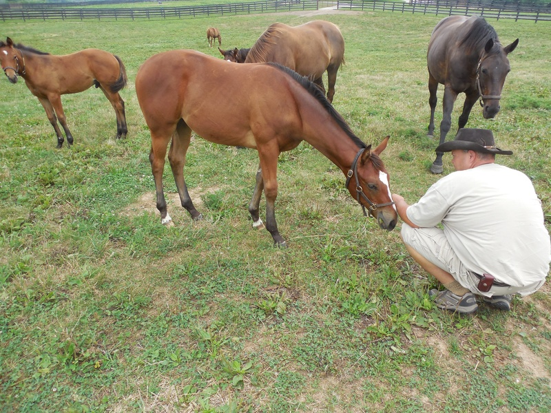 Thomas observing weanlings at Taylor Made Farm in 2014. This filly in particular grabbed his attention. A full sister to American Pharoah, later named American Cleopatra. (courtesy of THT Bloodstock)