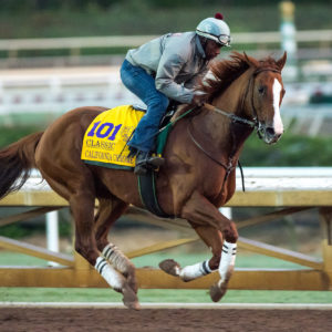 California Chrome exercises in preparation for the Breeders' Cup Classic at Santa Anita Park. (Photo by Scott Serio/Eclipse Sportswire/Breeders Cup)