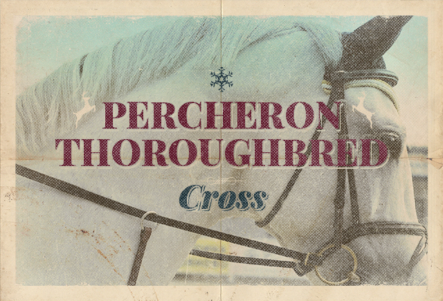12doc_1percheron_01v1