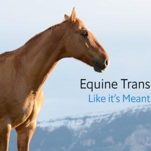 horse-network1