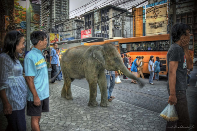 A baby elephant on the streets of Bangkok. (flickr.com/EJ Sabandal)
