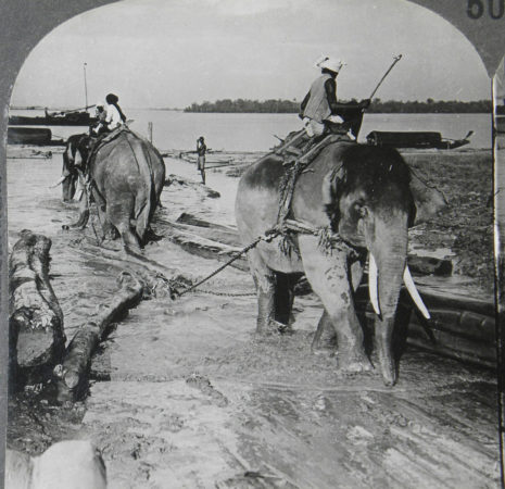 Elephants haul logs from the Salwin River, in Maulmain, Myanmar, circa 1900. (flickr.com/Mike Steele)