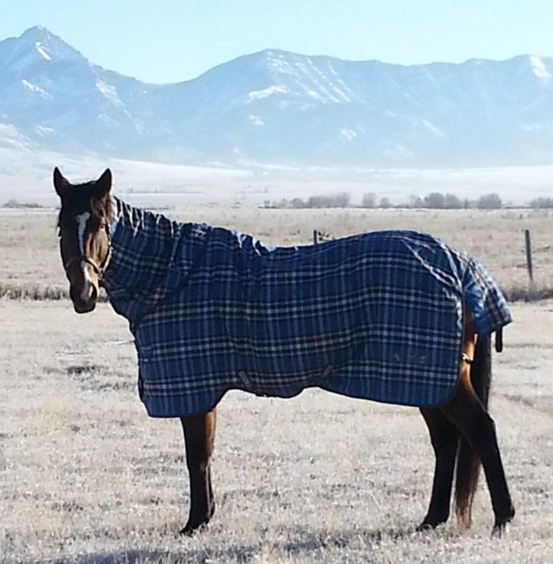 TK, at home on his Montana ranch. (©Melissa Thorson)
