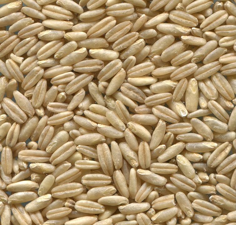 naked-oats-848959_960_720