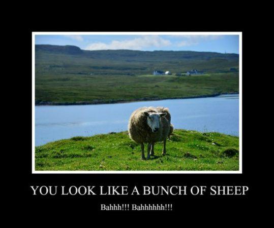 Bunch-of-Sheep-e1420380224464