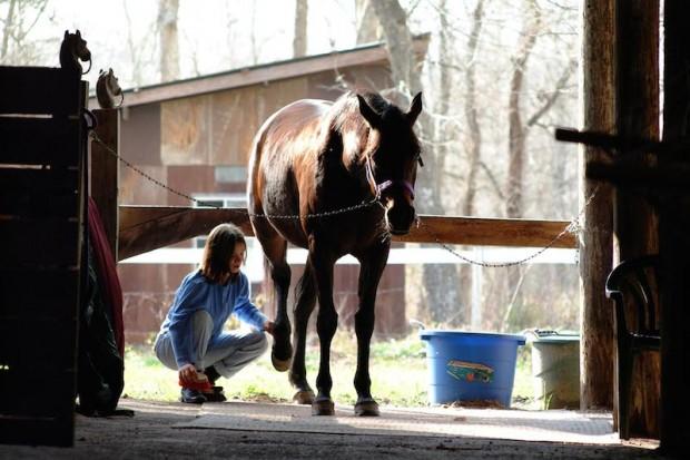 HorseGrooming3