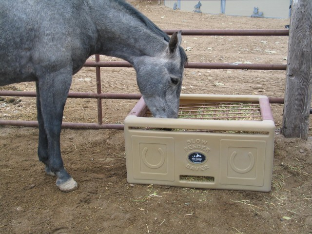 Horse_eating_from_Slow_Feeder_Saver-1-e1446578604880