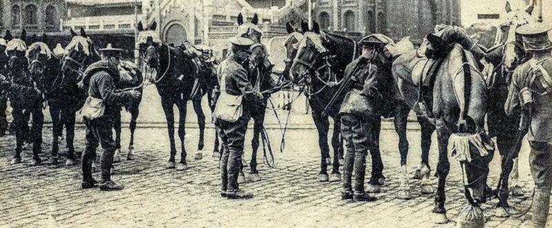 flickr.com_vasse-nicolasantoine_WWI-horses-FREE