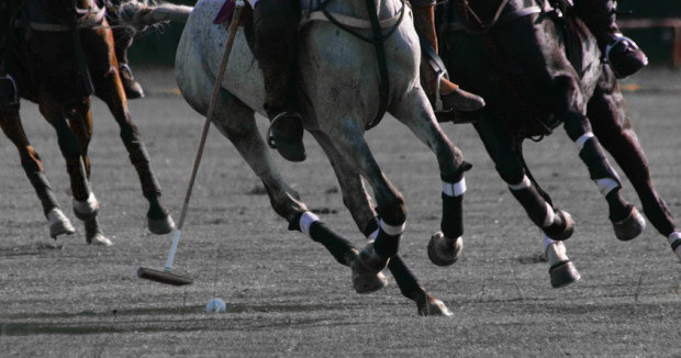 Equestrian Crash Course: What You Need to Know About Polo on