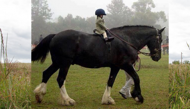 kid_on_a_horse.77dc6bfdf3