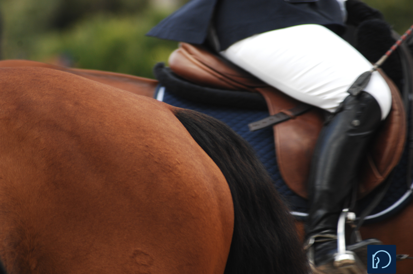 10 Things No One Tells You About Buying a Saddle*
