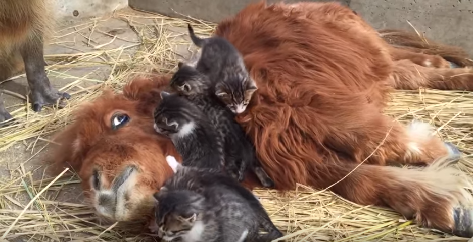 So a Mini Horse, Some Kittens and a Capybara Walk into a Bar...
