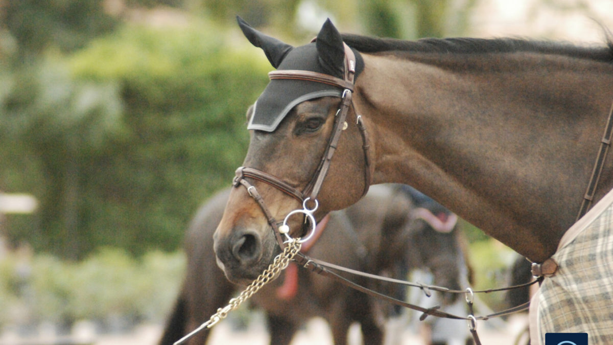 Q&A: How Do I Legally Protect My Sale Horse Before He Goes Out on Trial?