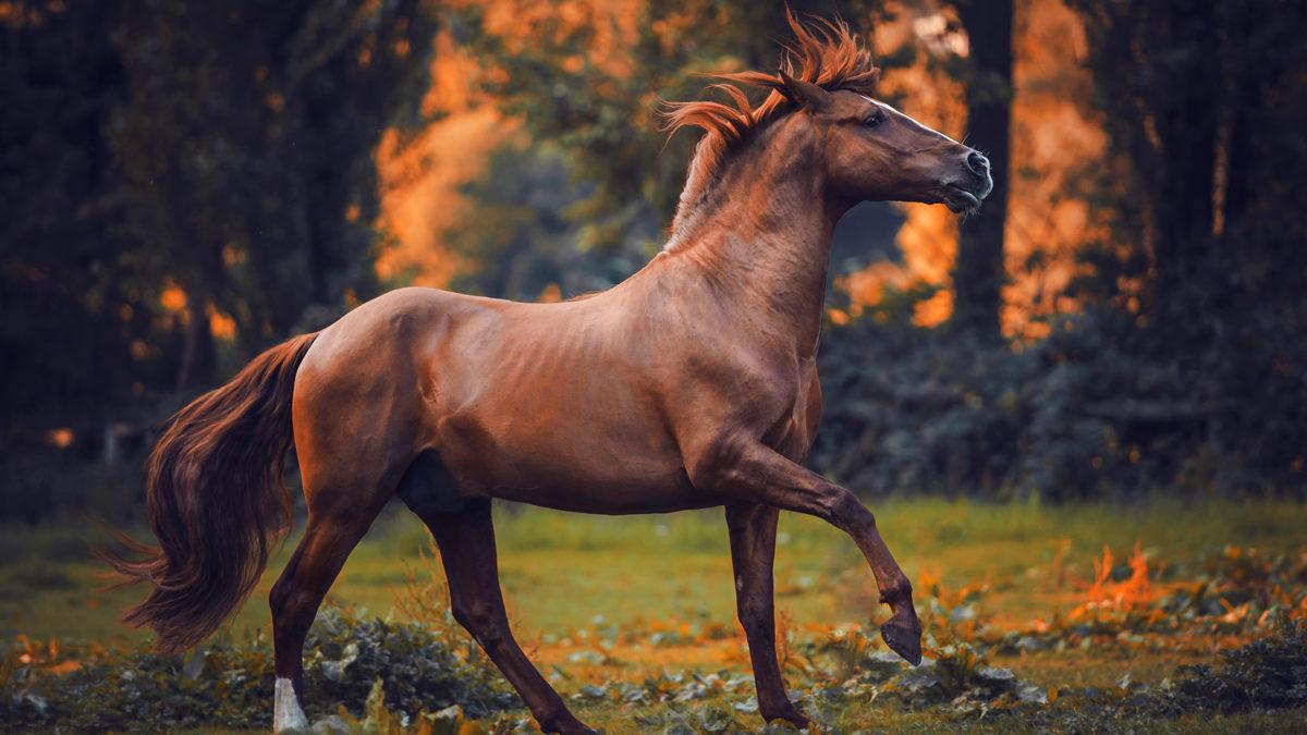 Фото лошадей красивые