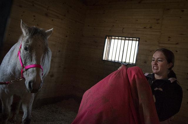Horse Blanket Gross FREE