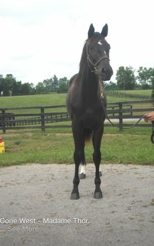 Z Camelot's big brother as a yearling, at Chesapeake Farm.
