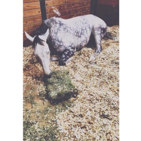 (©Working Equestrian)