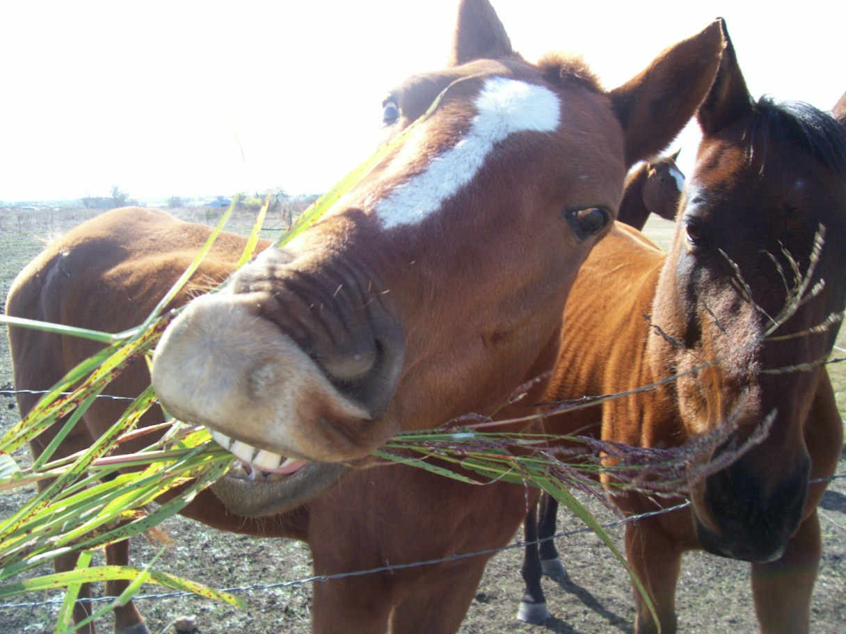 Do Horses Have Food Allergies