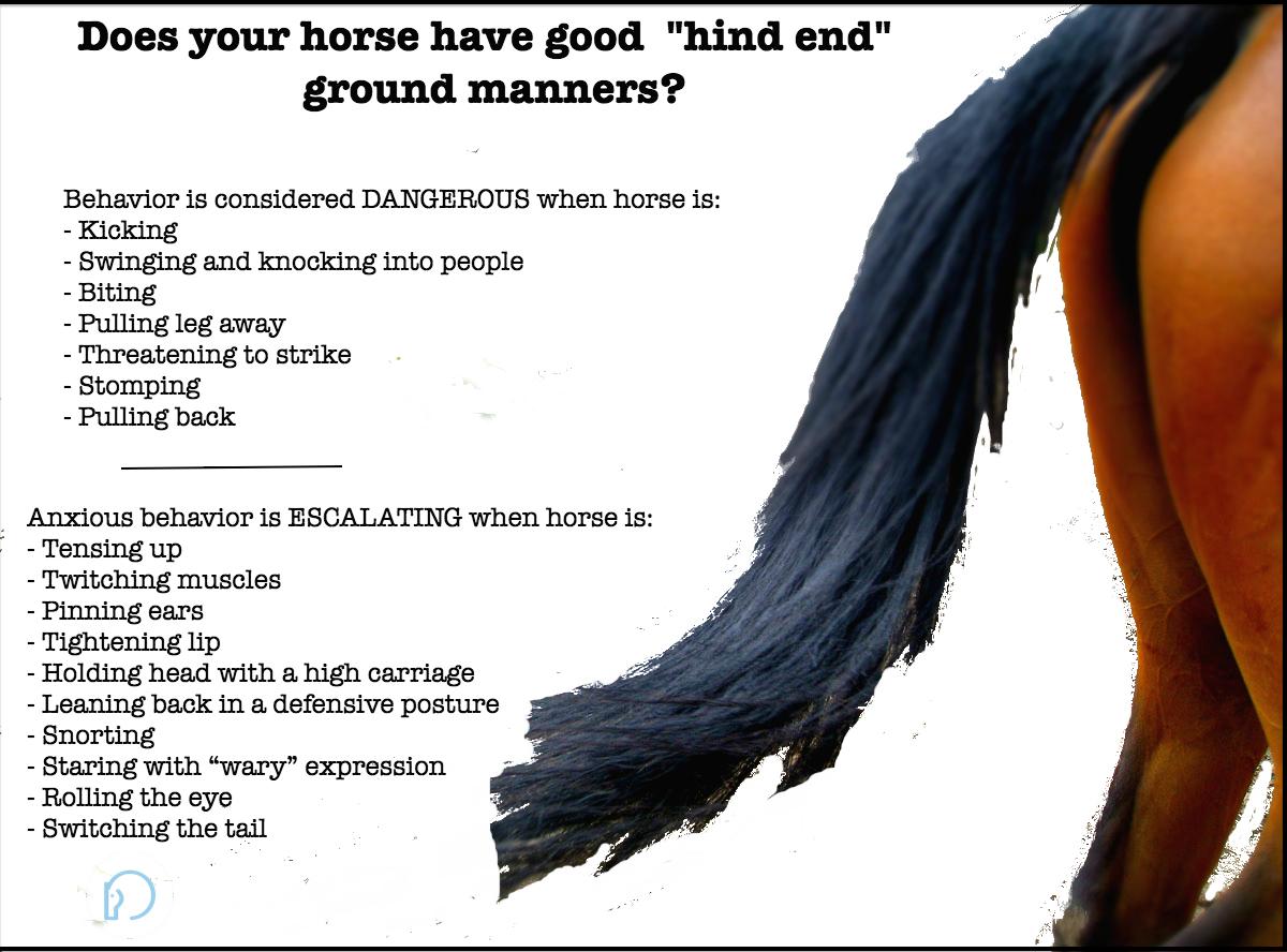tail-swishing-equine-body-language-full