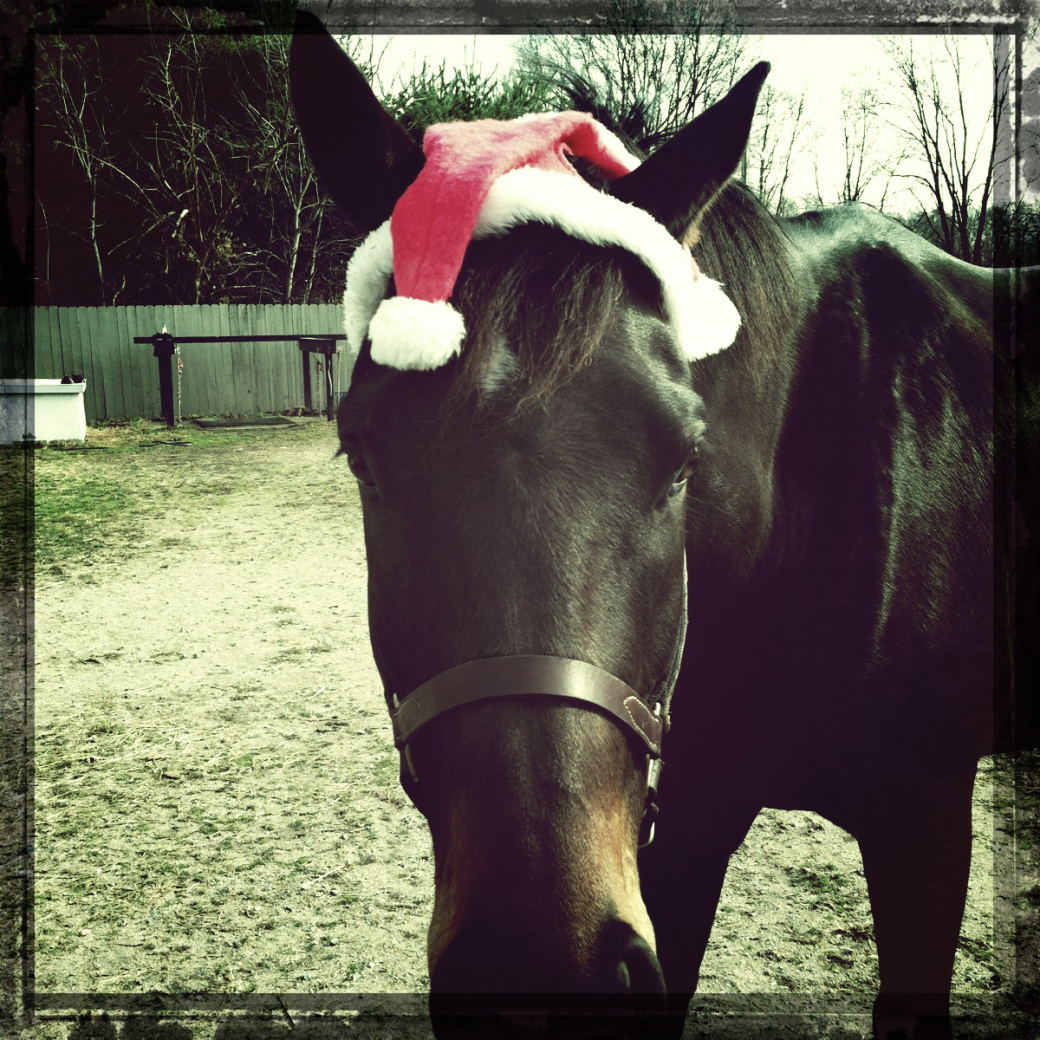 Jorge also wishes you the best. And asks that you don't dress up your horse in a stupid hat. ©Jorna Taylor