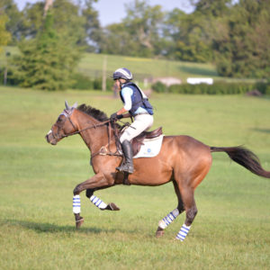 Kentucky Horse Park Archives | Horse Network