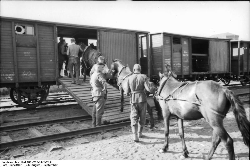 A Brief History on Horse Transport (and Why We're Thankful for the Trailers of Today)