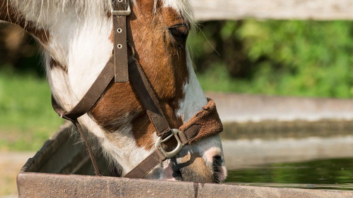 Barn Hacks Archives Horse Network