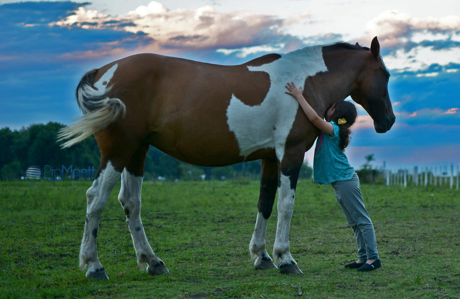 Horse Adopt